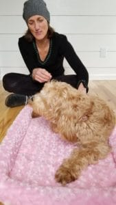 Friend Dondi helping Judy the Labradoodle in a photo shoot.